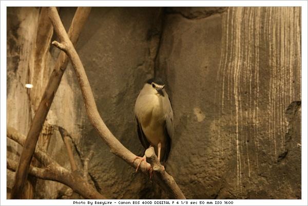 台北市动物园