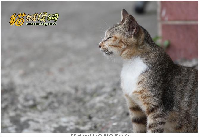 貓城侯硐。貓城故事