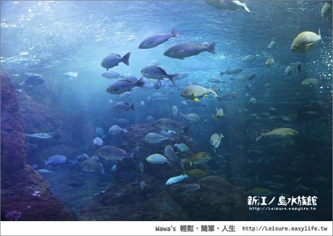 壁纸 海底 海底世界 海洋馆 水族馆 桌面 670_476
