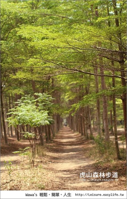 虎山國小森林步道、西瓜山森林步道