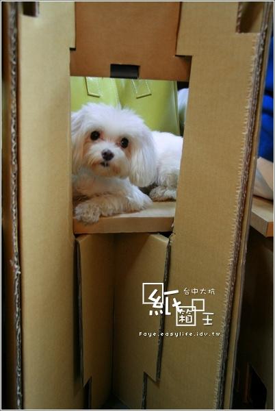 台中 大坑 紙箱王