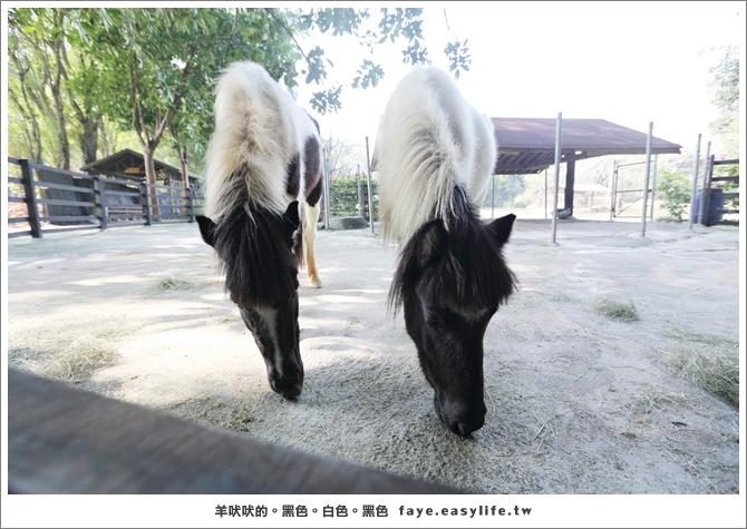 台南柳營【南元農場】。好看好玩好促咪,超適合親子同樂的生態之旅!