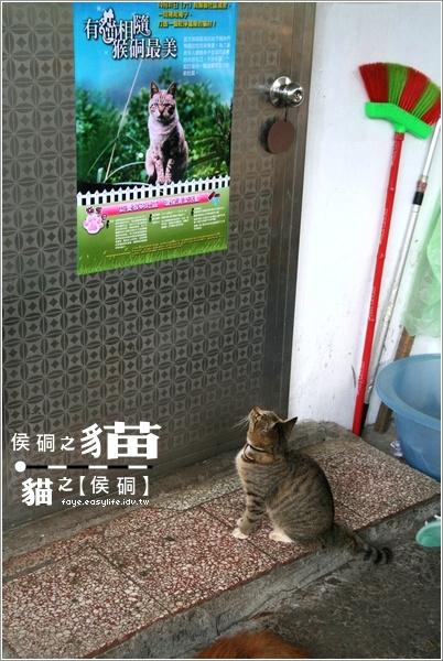 猴硐 侯硐 貓 貓博士夫人